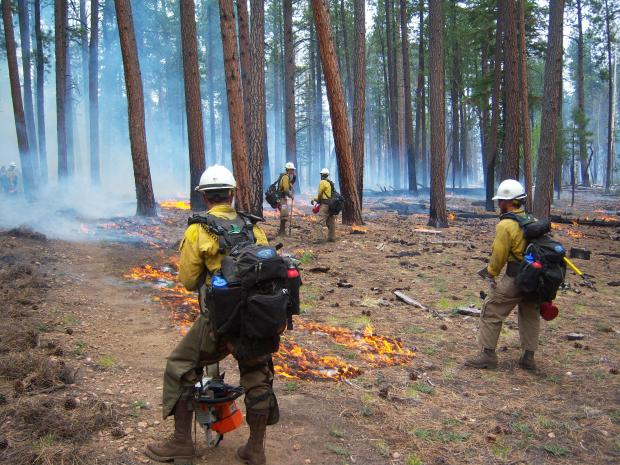 Firefighters were able to burn out along the handline from the canyon rim, around the cabin and tie into the W-4 road to confine the fire in that area. [Credit: NPS photo]