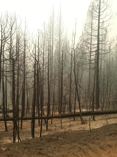 View of Burn in White Meadows on 9/19/14