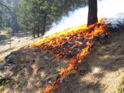 School Point Prescribed Fire | Courtesy: @inciweb