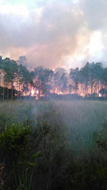 Photo Credit: Jason Longfellow / Florida Forest Service