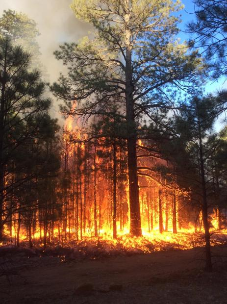 Jack Fire. (Credit: Horn, USFS)