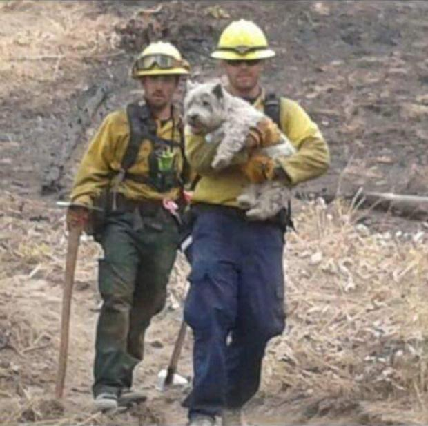 Rescuing pet on the Suncrest Fire by inciweb 8.31.2016