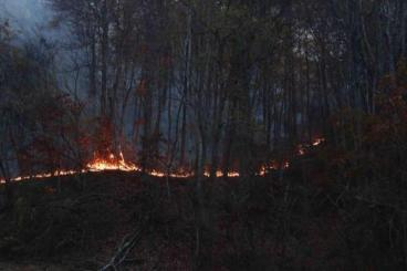 muskrat-valley-fire-nc-11-11-2016-inciweb
